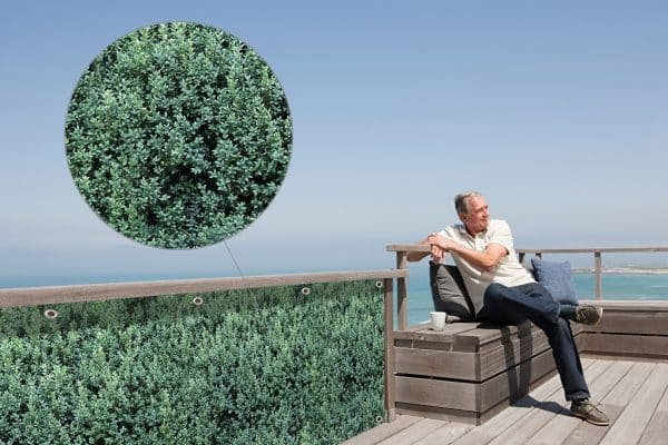 myfence Sichtschutz Buxi Anwendung Terrasse